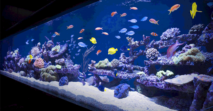Un casino hacké à travers le thermomètre connecté de son aquarium